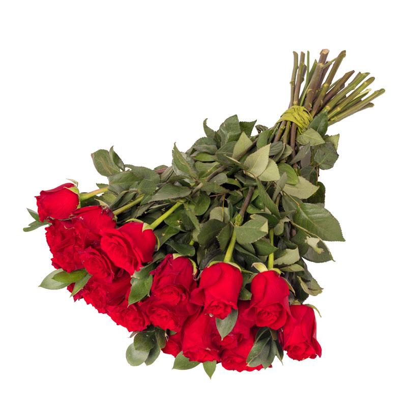 Róże dla Ukochanej Główna