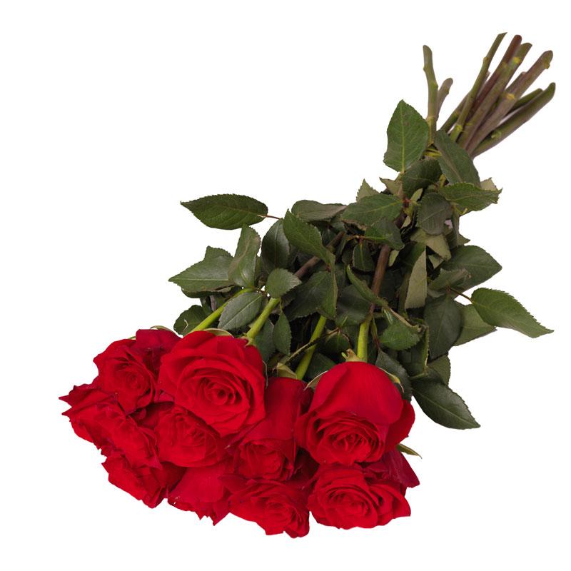 11 róż czerwonych Laflora
