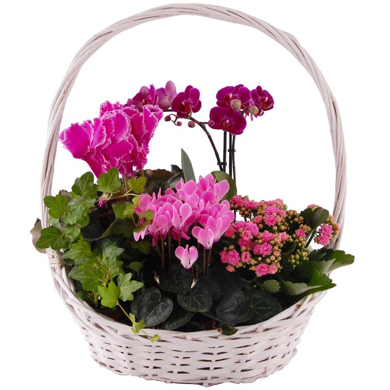 Kompozycja roślin kwitnących Kwiaty