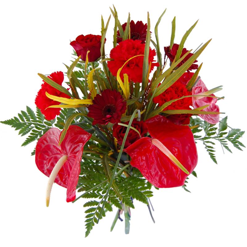 Ognista Miłość Kwiaty
