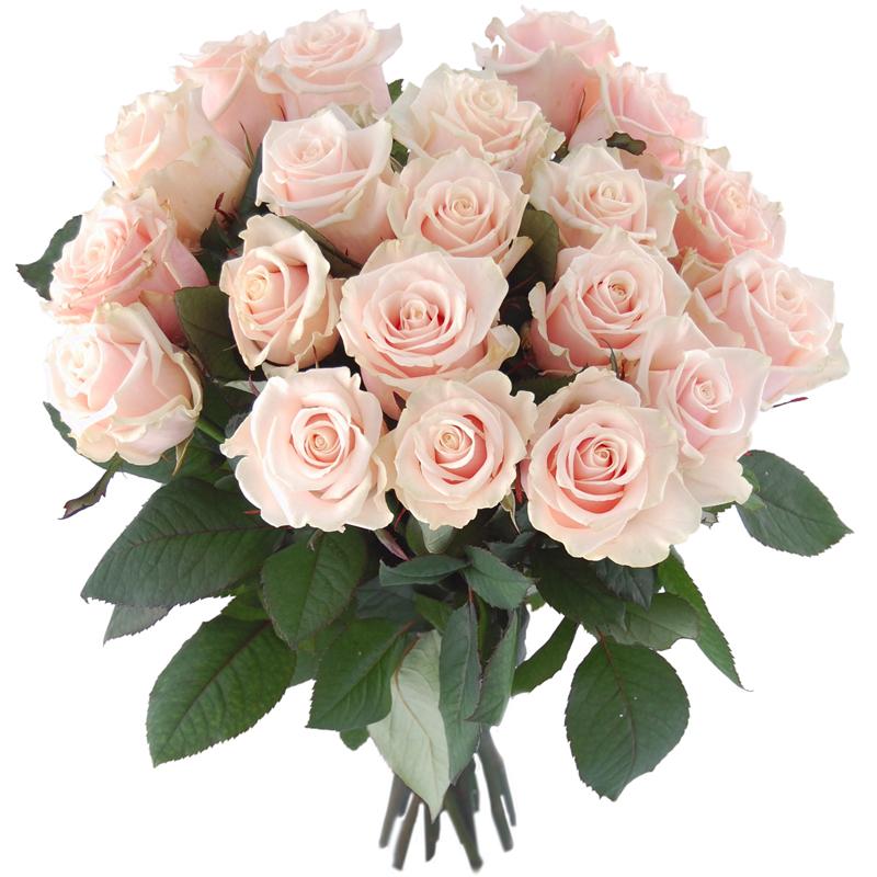 Białe róże Kwiaty