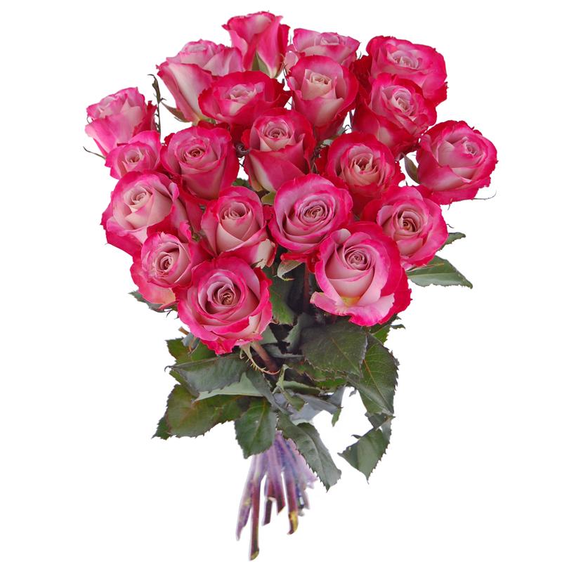 Roze Urodzinowe 20 Roz Bukiet Roz Na Urodziny Wyslij Swieze Kwiaty