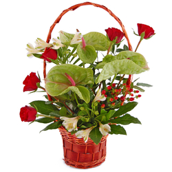 Anturia, róże i alstromerie...